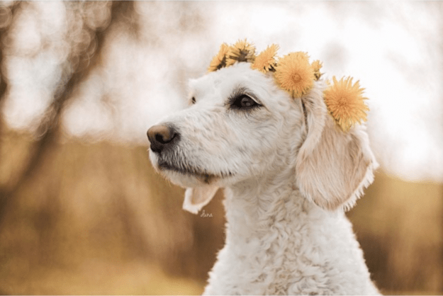 handsome-dogs-wreath