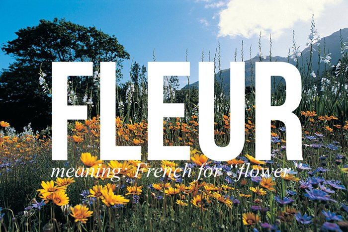 harry-potter-names-fleur