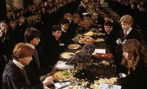hogwarts-awkward-great-hall-owl