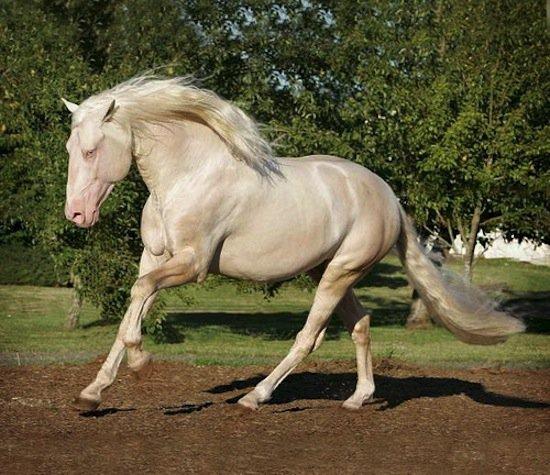 horse-cream