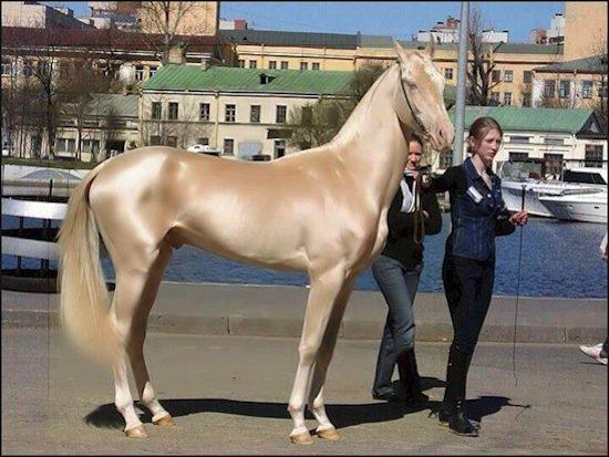 horse-light