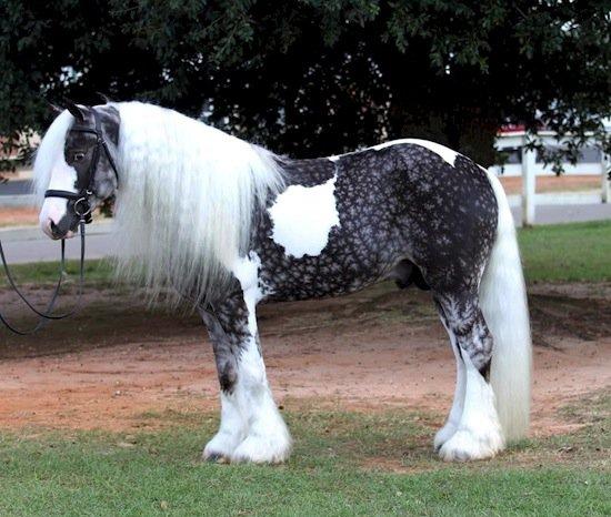 horse-long