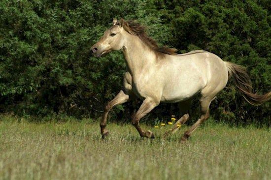 horse-silver