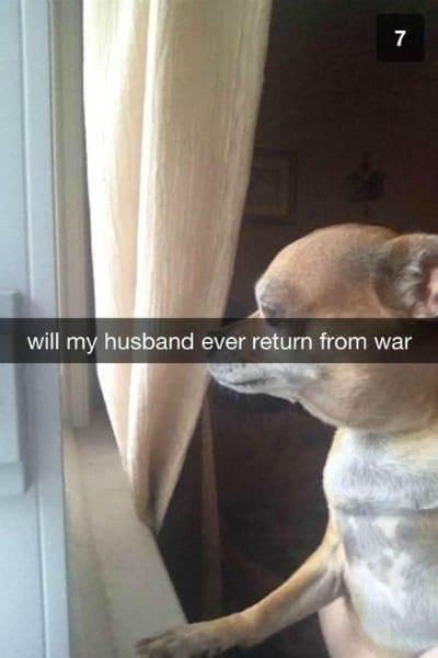 husband war dog