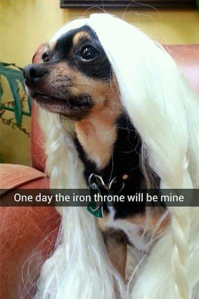 iron throne dog