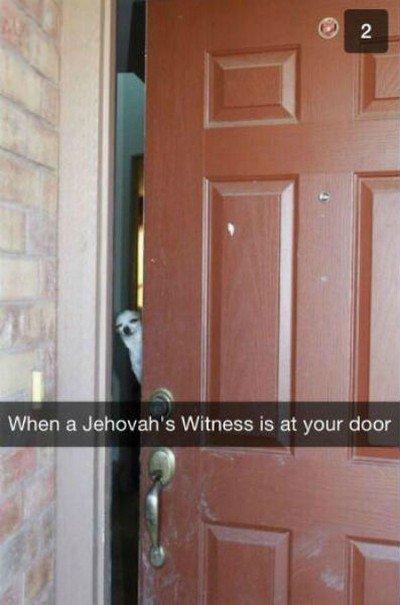 jw dog door