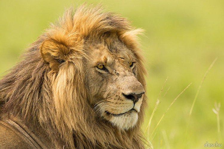 kenya-king