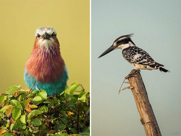 kenya-kingfisher