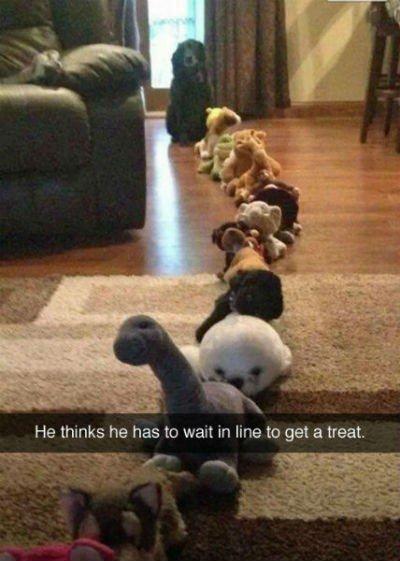 line dog