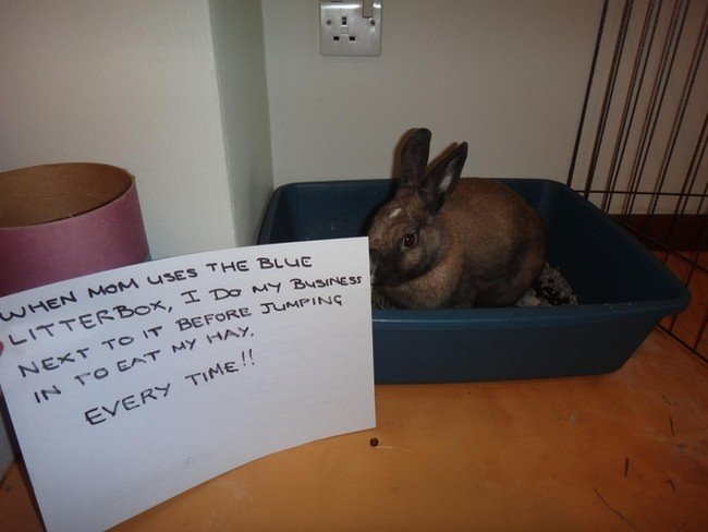 20 Bunny-Shaming Photos Of Some Very Guilty Rabbits