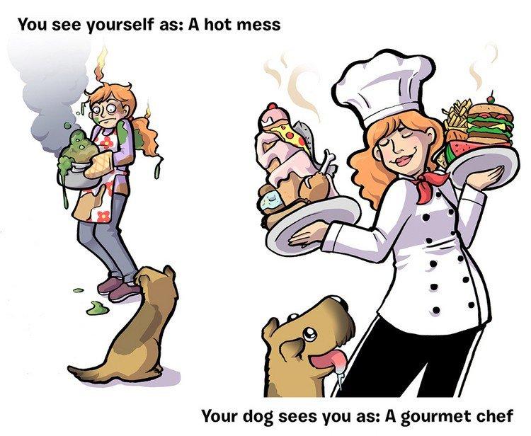 mess chef dog