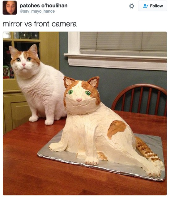 mirror-v-camera-roll-cat