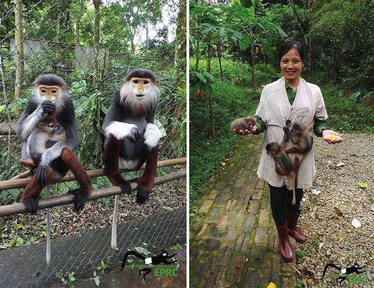 monkeys-crazy
