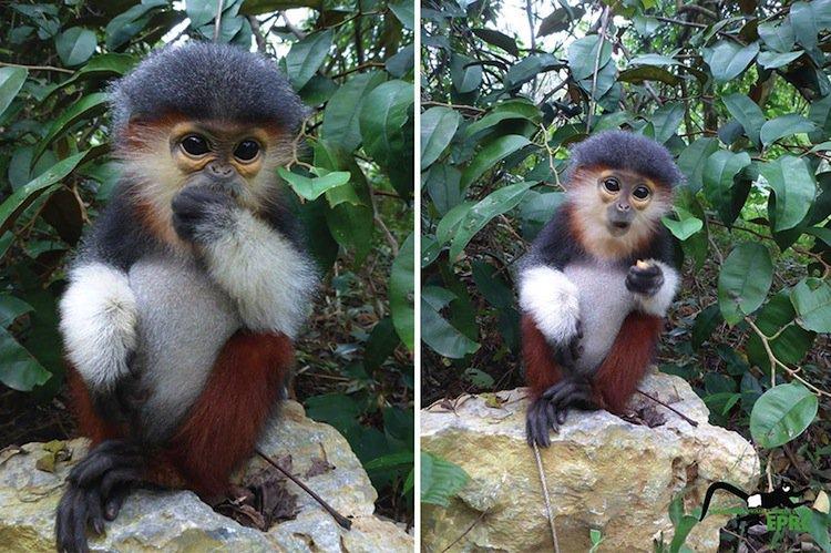 monkeys-cute