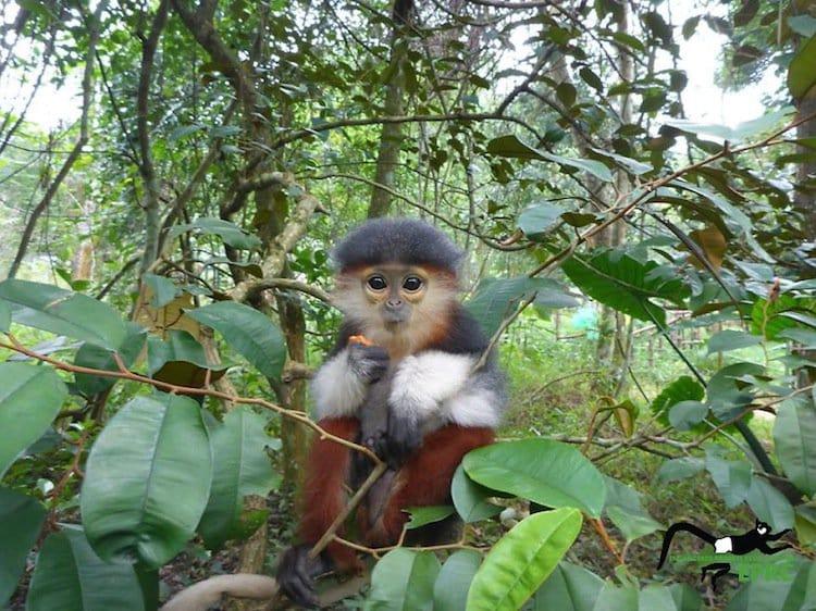 monkeys-first