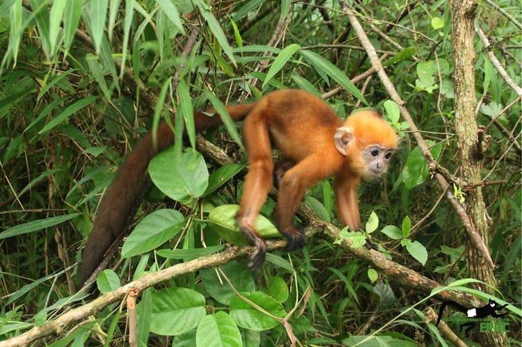 monkeys-orange-two