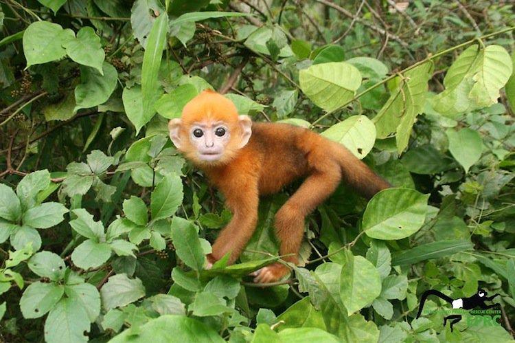 monkeys-orange