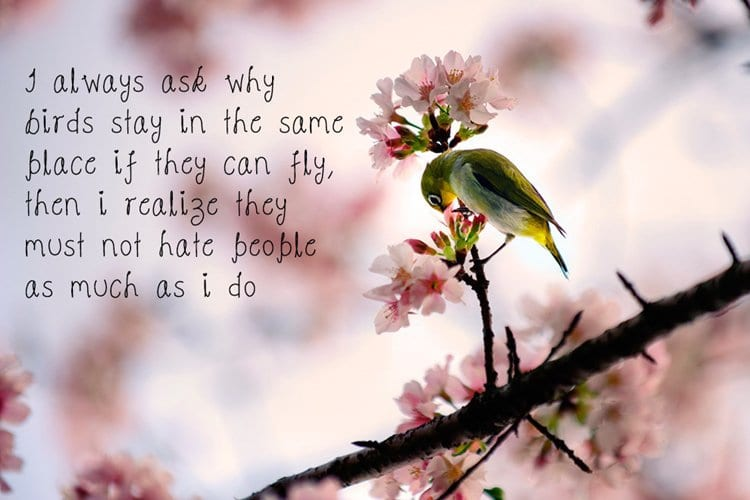 motivational-posters-hate-people-birds