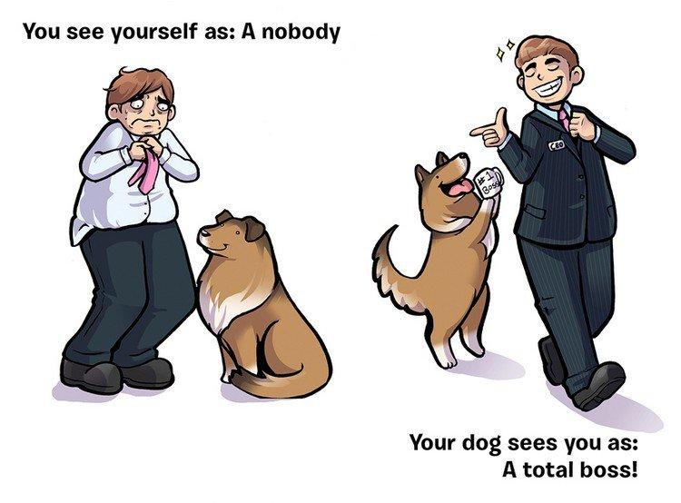 nobody boss dog