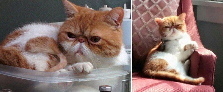 orange white kitty
