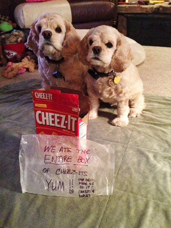 pet-partners-in-crime-cheez-its