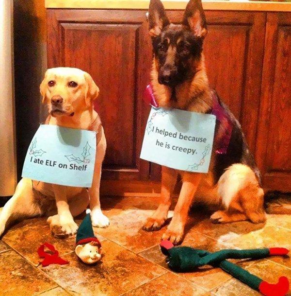 pet-partners-in-crime-elf