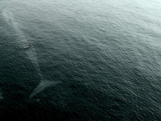 photo-whale