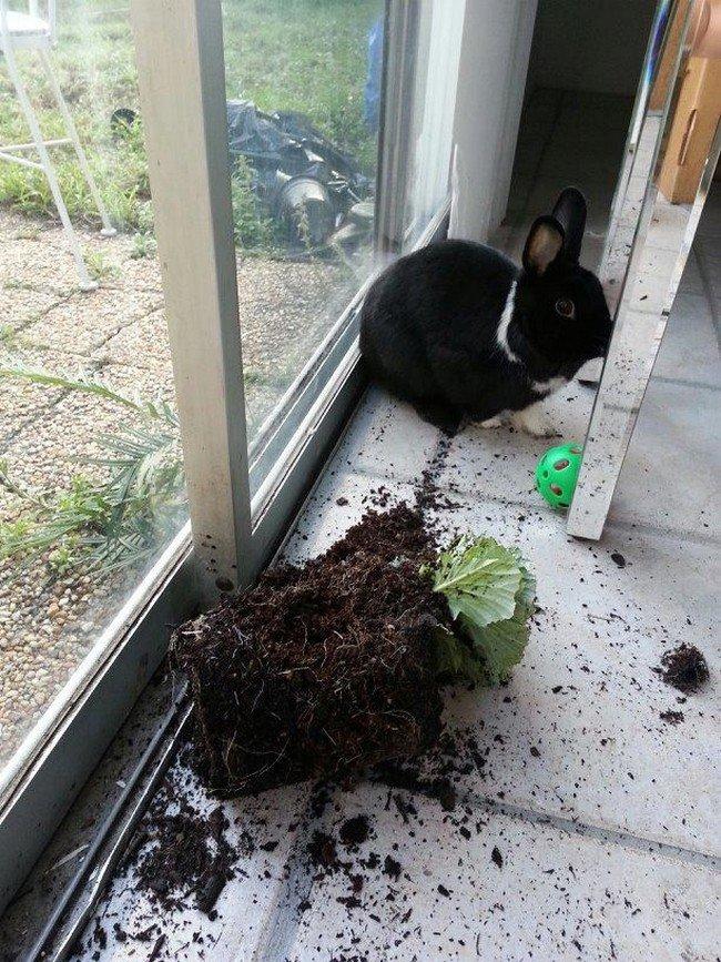 rabbit plant wreck