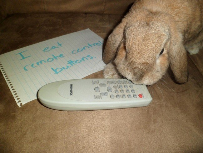 rabbit remote control
