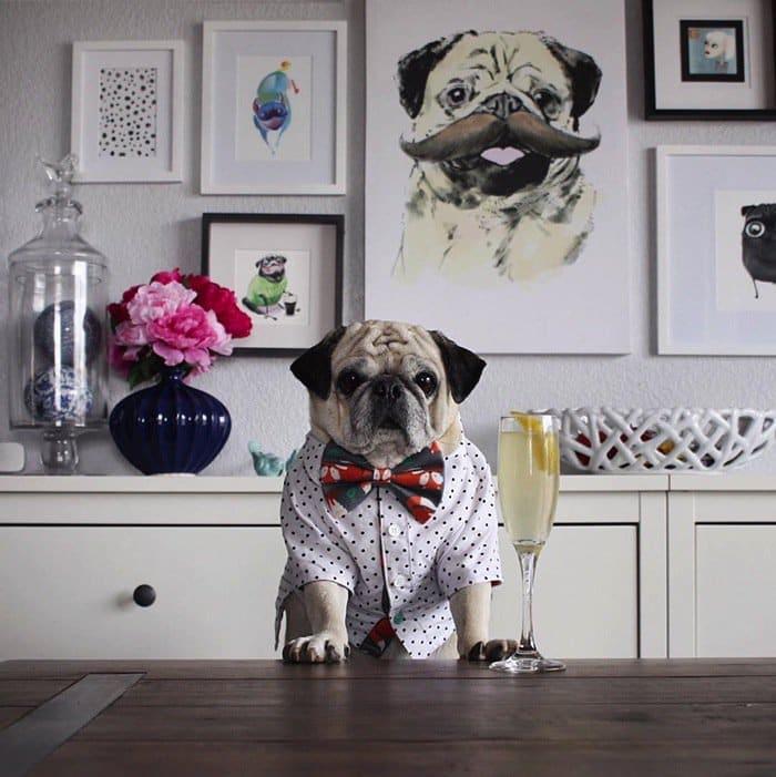 rocco-dog-bowtie