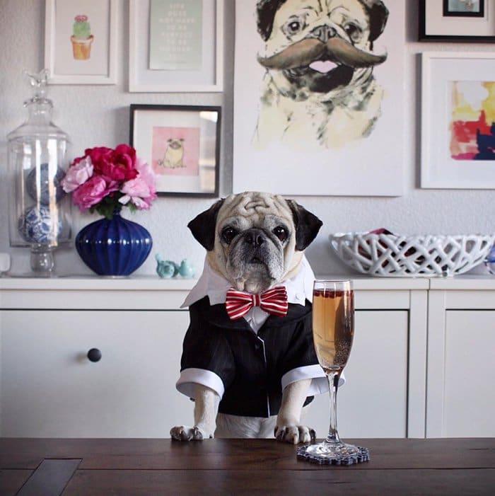 rocco-dog-classy