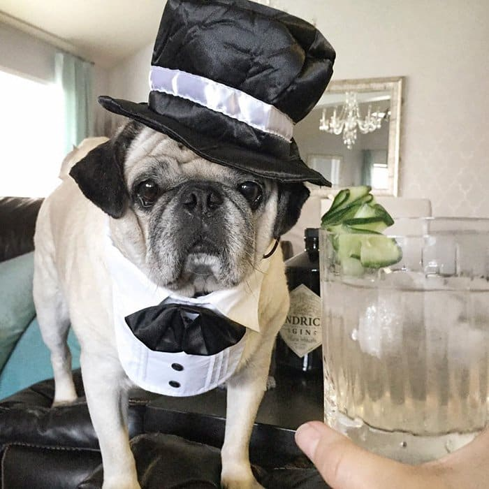 rocco-dog-top-hat