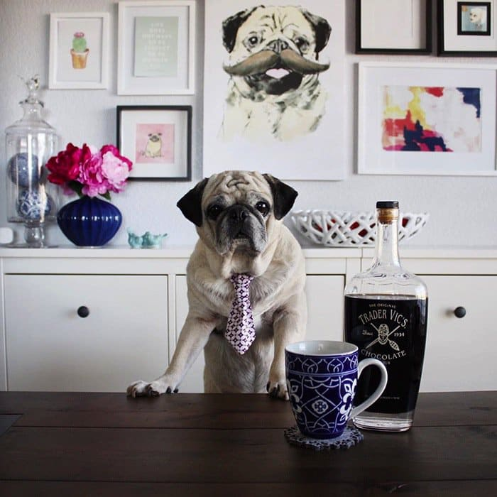 rocco-dog
