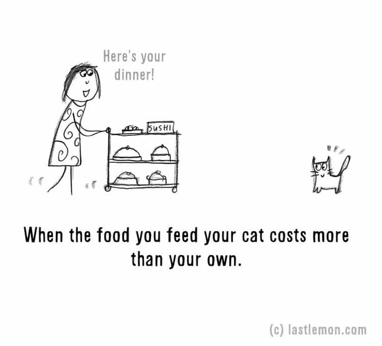 signs-that-youre-a-crazy-cat-parent-food