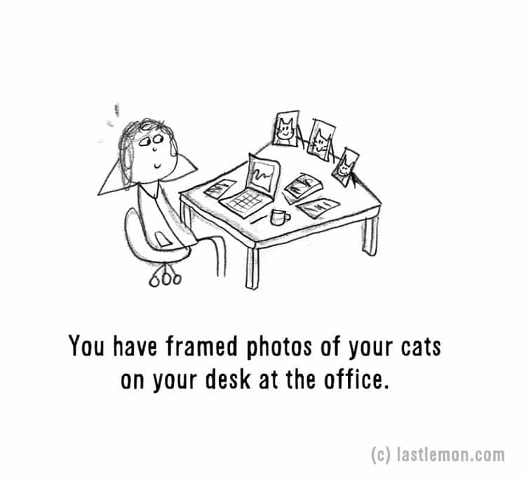 signs-that-youre-a-crazy-cat-parent-photos