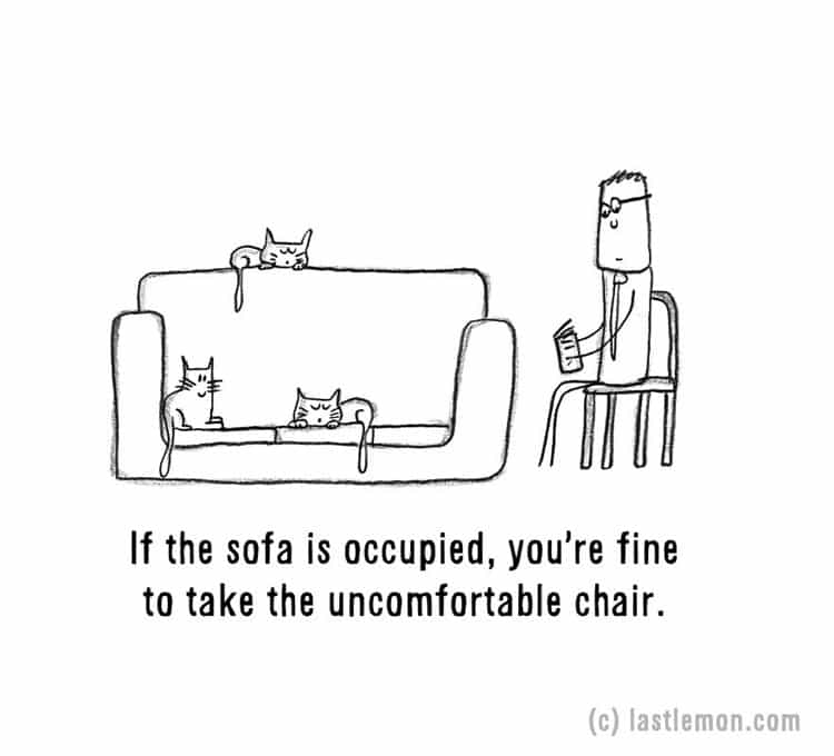 signs-that-youre-a-crazy-cat-parent-sofa