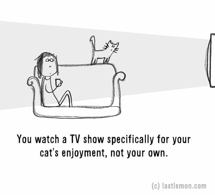 signs-that-youre-a-crazy-cat-parent-tv