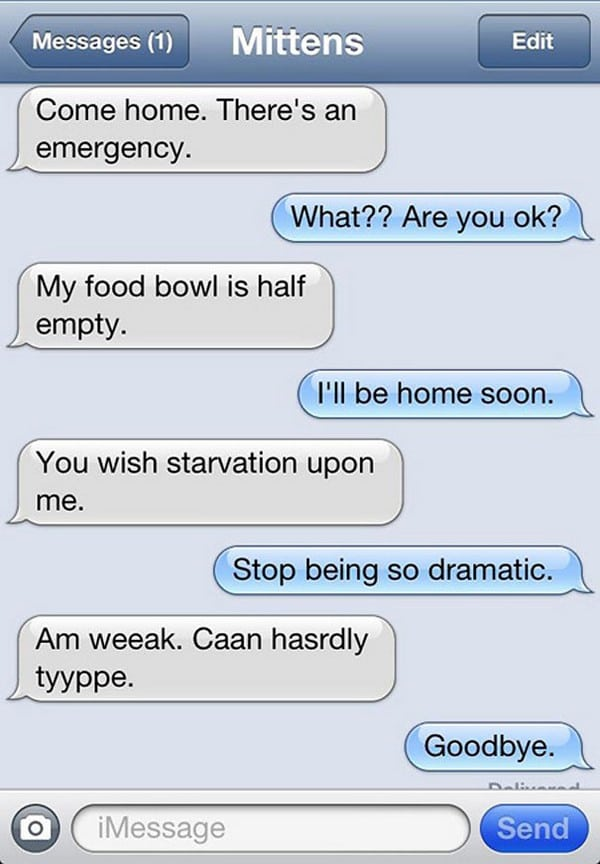 starving cat text