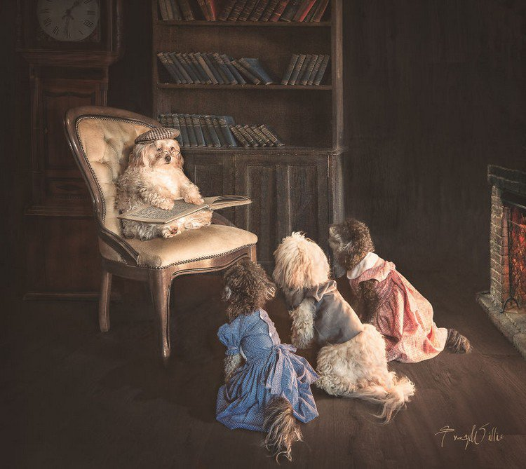 storytime dogs