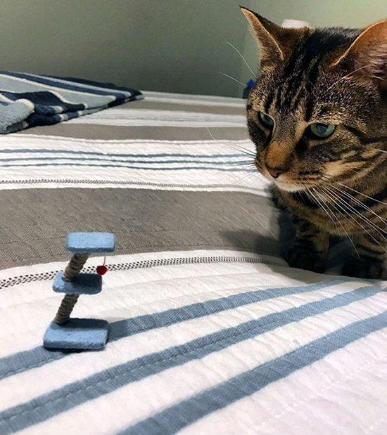 tiny cat toy fail