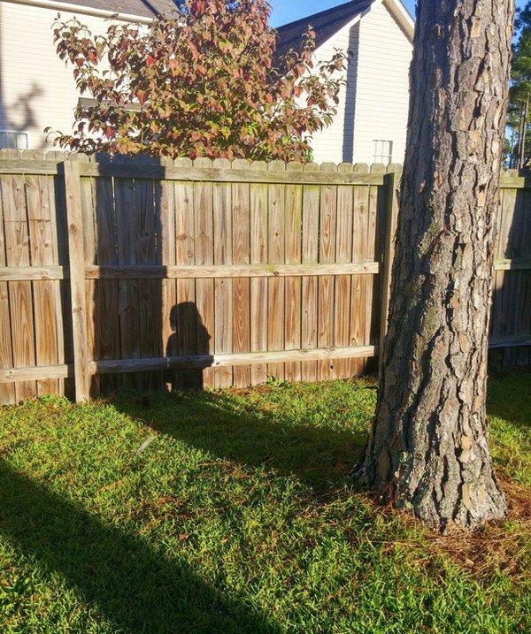 tree hide shadow