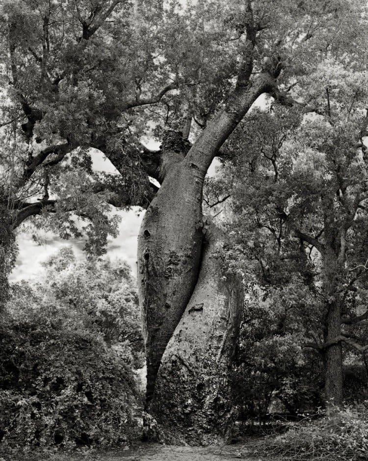 twist tree