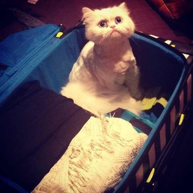 white cat case
