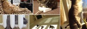 Adorable Cats Enjoying Warmth