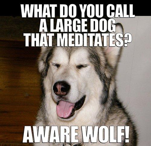 Awarewolf