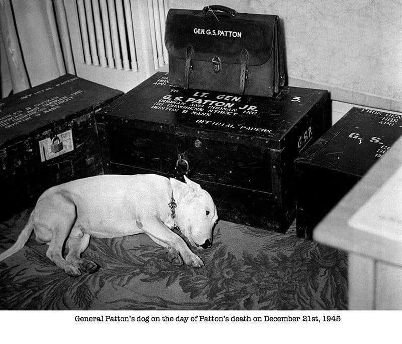 General Patton Dog