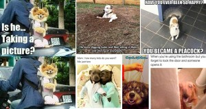 Hilarious Images Dogs