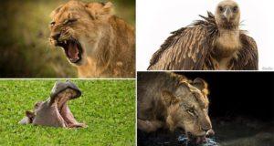 Safari Photographs Wild Animals Kenya