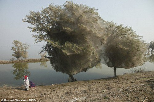 amazing-nature-ghost-trees