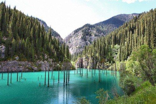 amazing-nature-underwater-forest